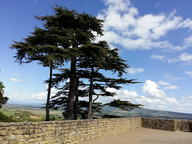 drzewa we Francji