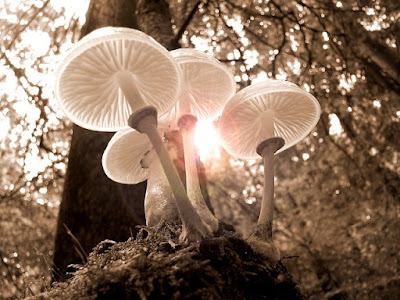 Pengetahuan tentang sifat Jamur dari cara memperoleh Makanan