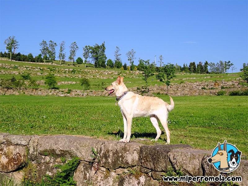 Can de Palleiro en el Parque Oriental De Oporto con perros