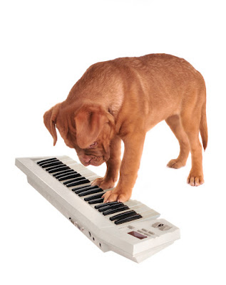 A puppy learns a trick with a keyboard