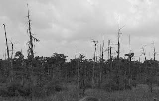 haunted swamp 4