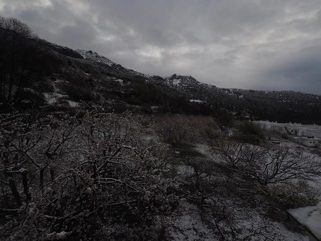 Nieve en los cerezos en flor Bubión 22 de marzo 2020