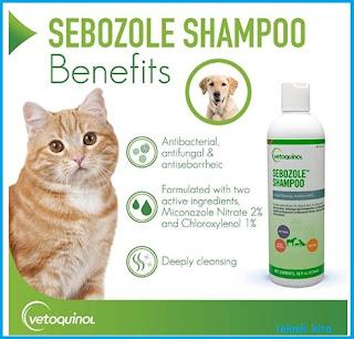 Shampo kucing terbaik rekomended anti jamur dan bulu rontok