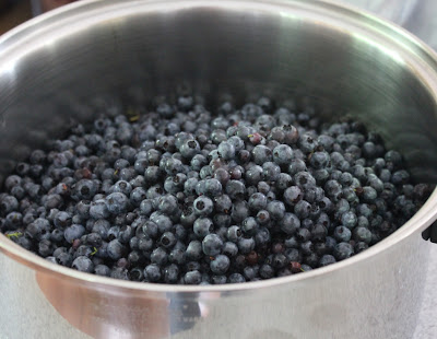 low bush blueberries ready to boil