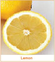 Jeruk Lemon - Hespiridium - Karakteristik Hasil Samping Buah