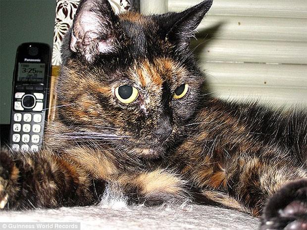 dunyanin-en-yasli-kedisi
