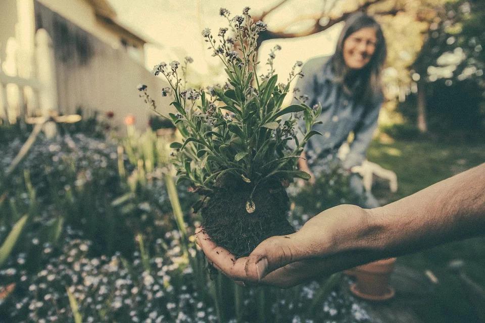 Cómo transformar tu jardín ordinario en extraordinario 3