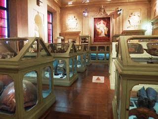 The Ulisse Aldrovandi Museum at the Palazzo Poggi