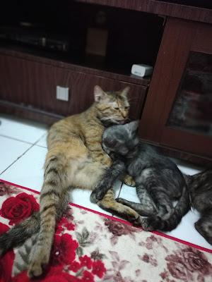 tanda tanda kucing sakit,kucing kencing merata