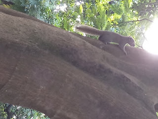 Squirrel climbing up on a tree