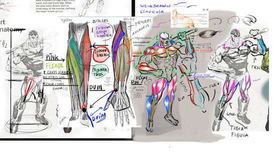 anatomie tekenen,anatomisch tekenen,spieren tekenen,anatomie leren tekenen,figuren tekenen