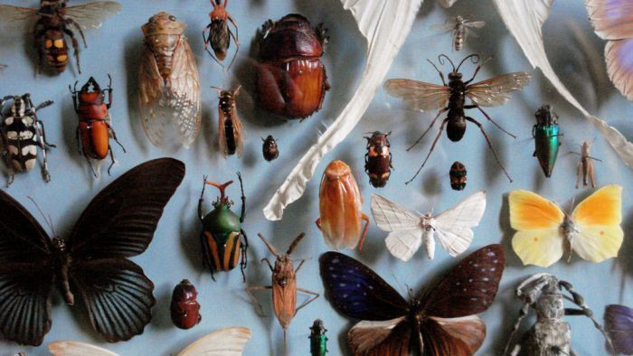 Apa yang Akan Terjadi jika Serangga Punah?  Belajar Sampai Mati, belajarsampaimati.com, hoeda manis