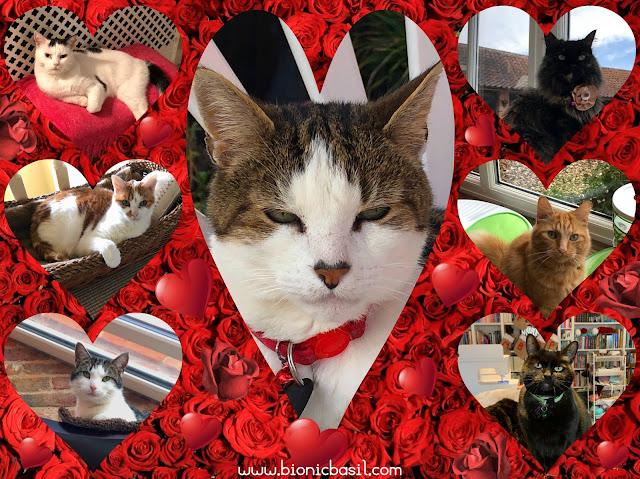 The B Teams Valentine's Selfies ©BionicBasil®Sunday Selfies