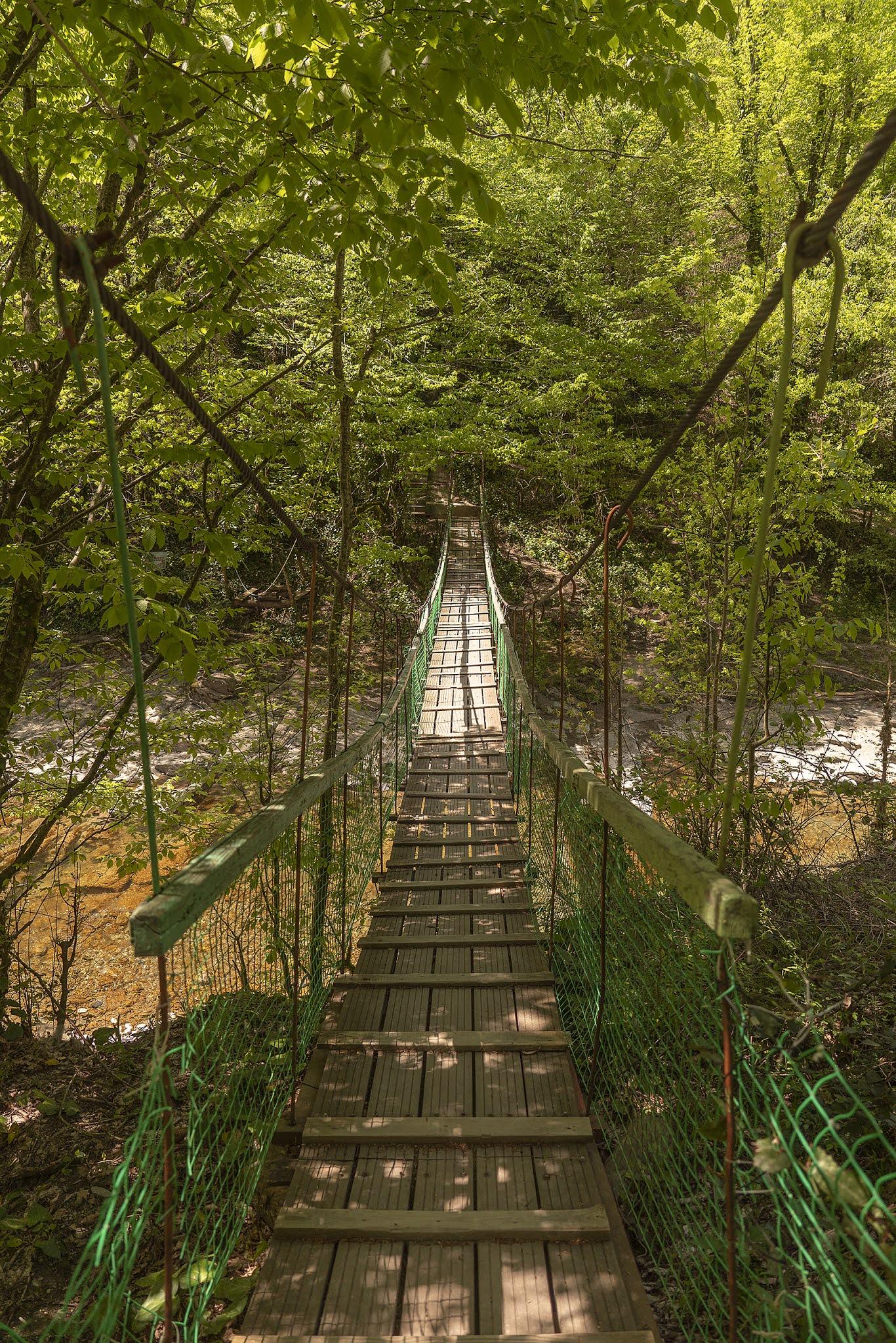 photo Igor Novik suspended bridge jnugli Sochi Dagomys forest mountain stream summer green foliage