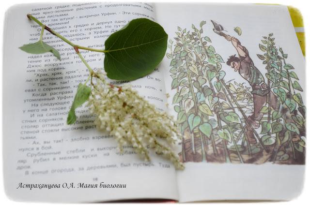 gorec-sahalinskij-dlja-junogo-naturalista