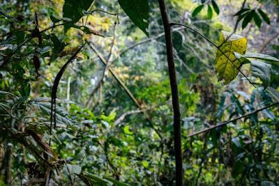 Inside of Satchari national park
