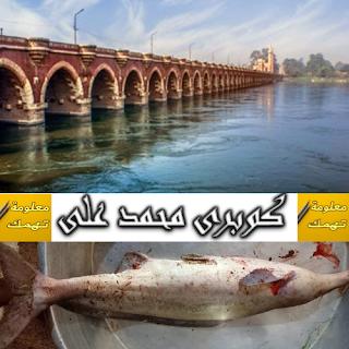 طريقة صيد سمك الأنوم النيلى | صيد سمك الانوم