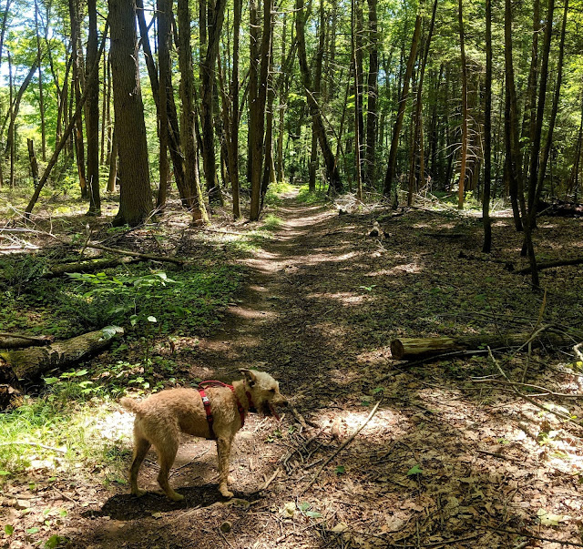 Dogs at Paugussett State Forest