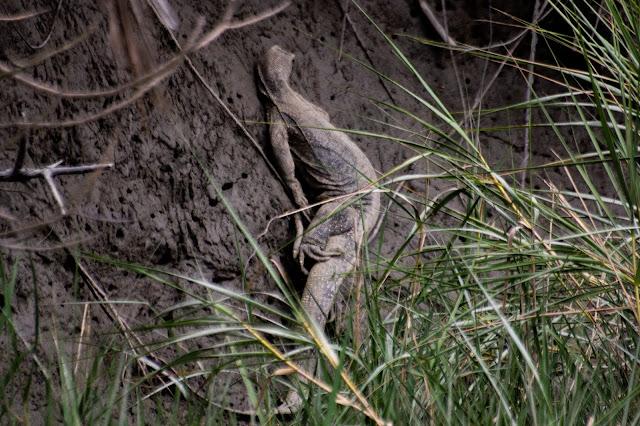 sunderbans national park