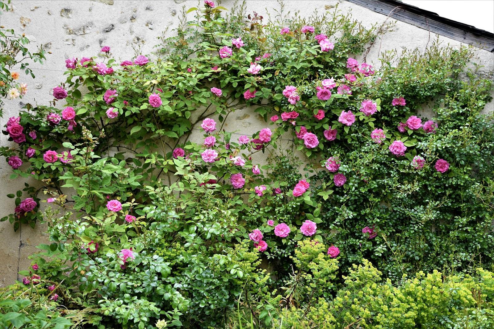 Stunning Un Petit Jardin Du Nord Isere Pictures - House Design ...