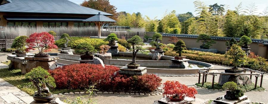 Omiya Bonsai Garden