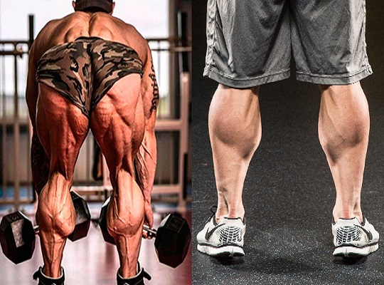 7 Major Mistakes Limiting Your Calf Size - bodybuilding110