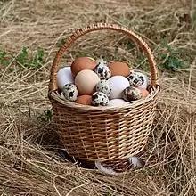 Fakta Menarik Tentang Telur