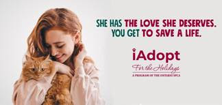 iAdopt For the Holidays: Tis' the season to find a forever home