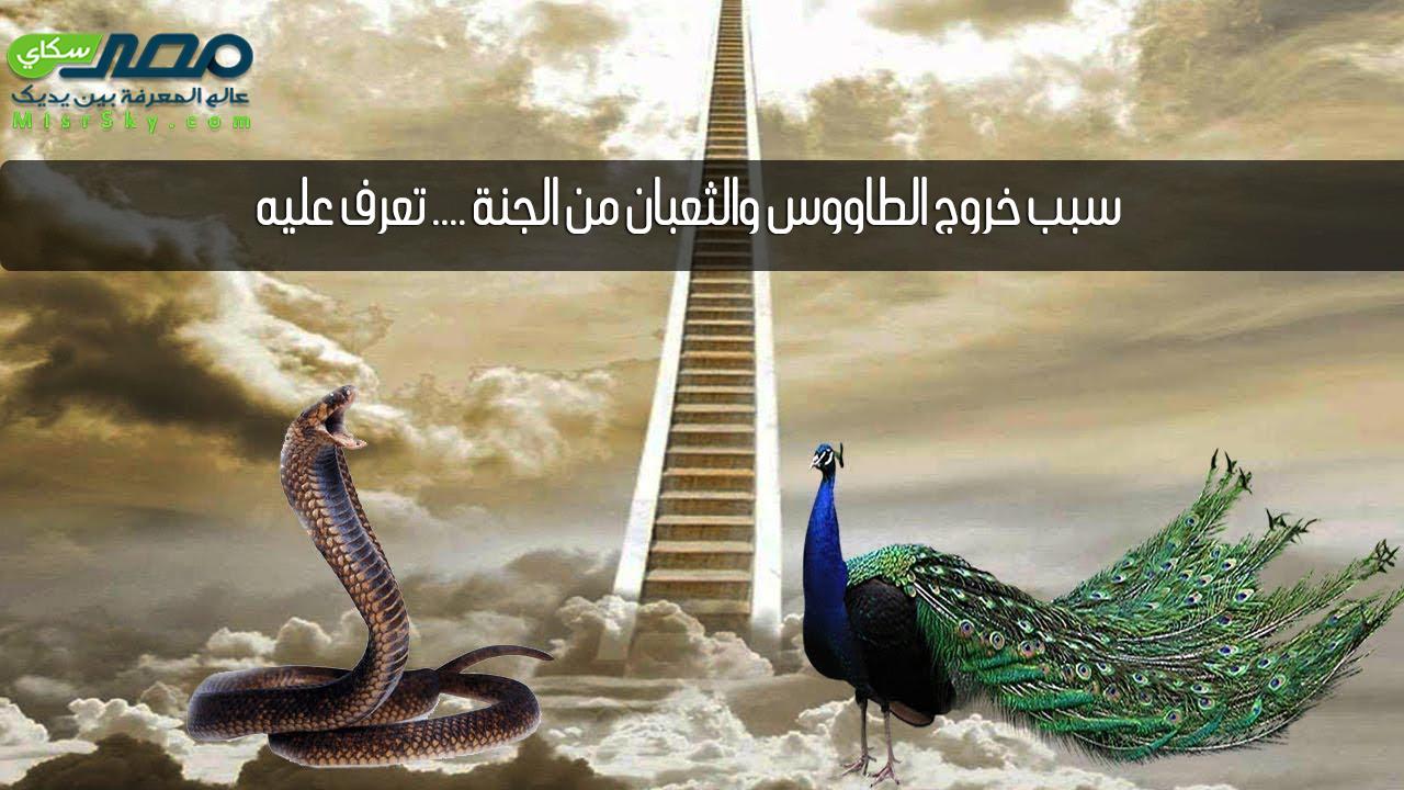 سبب خروج الطاووس والثعبان من الجنة .... تعرف عليه