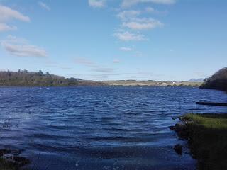 jazero s labuťami a domami na pozadí