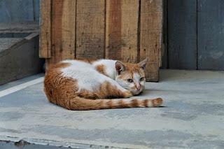 gato en recuperación