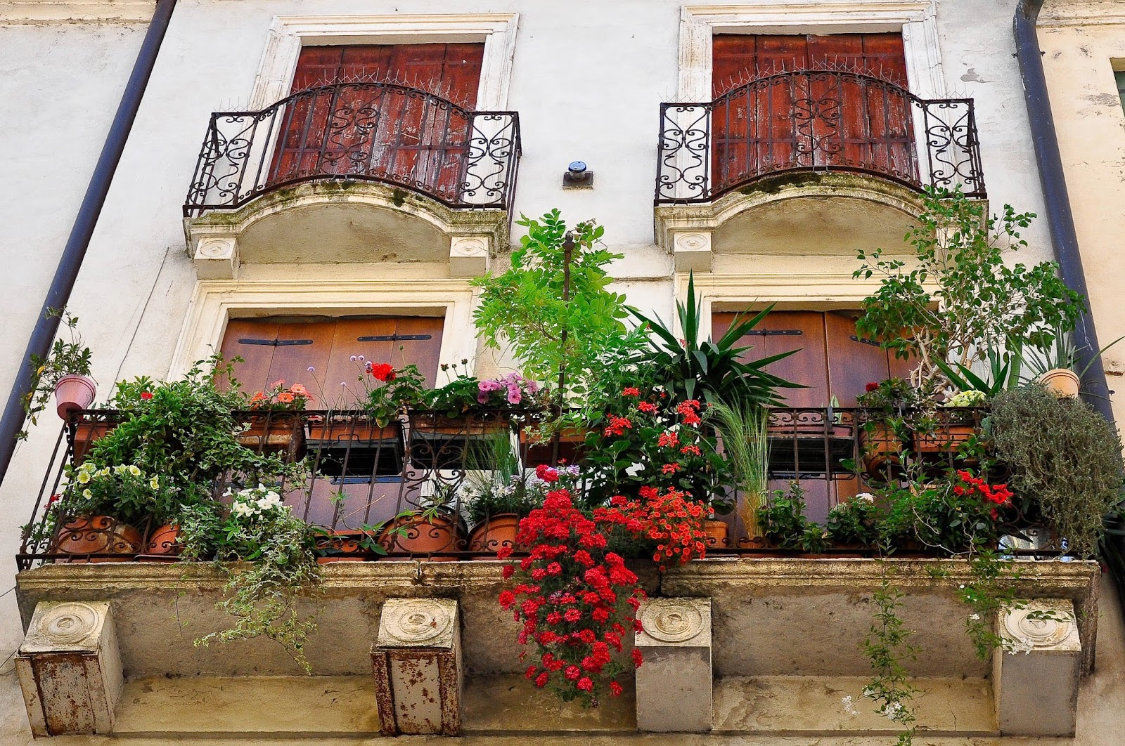 A hanging garden on a balcony with red cascading flowers in Vicenza, Italy