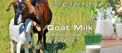 बकरी दूध से फायदे Goat Milk Benefits in Hindi