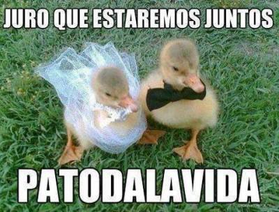 Imagenes Chidas Chingonas De Todo Tipo Con Frases De Amor De