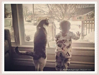Sweet Cats at Home Images