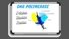 DNA Polymerase , Definition,Structure and Function