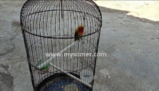 https://www.mysomer.com/2019/08/cara-membuat-lovebird-setres-alami-menjadi-gacor.html