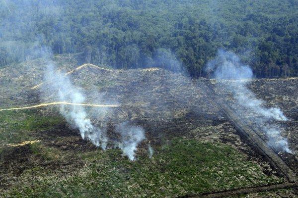 Amerika Bantu Restorasi Hutan Indonesia 2,9 Juta Dollar