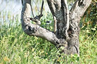 paisaje-aves-del-huila-complemento-fotografias-paisajes