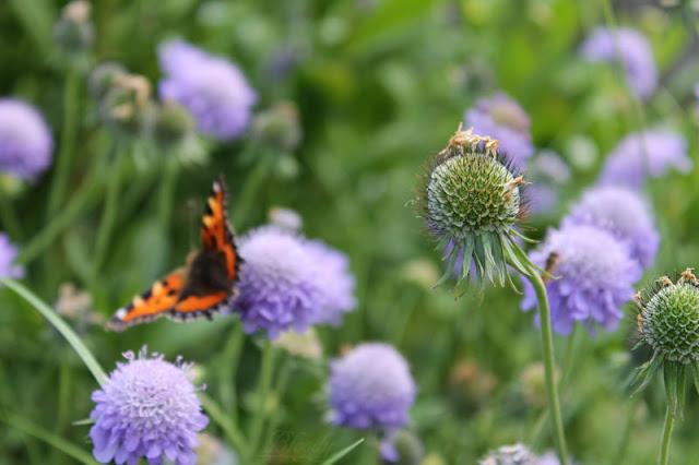 Abgeblühte Blume mit Schmetterling im Hintergrund