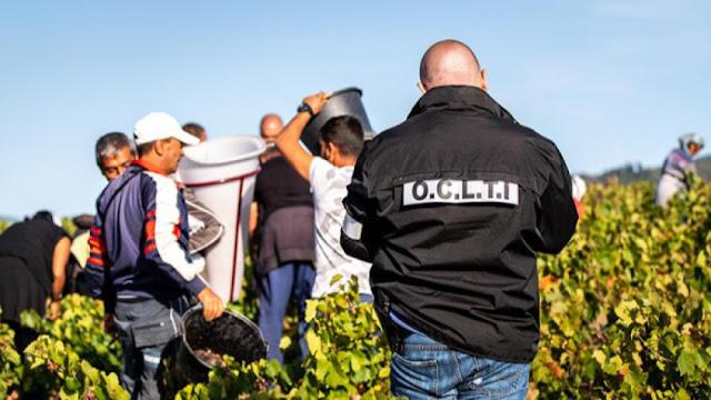 167 българи – съвременни роби във Франция! Брали грозде в Бургундия