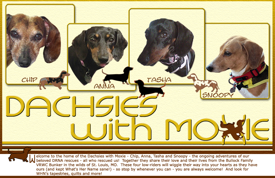 Dachsies With Moxie