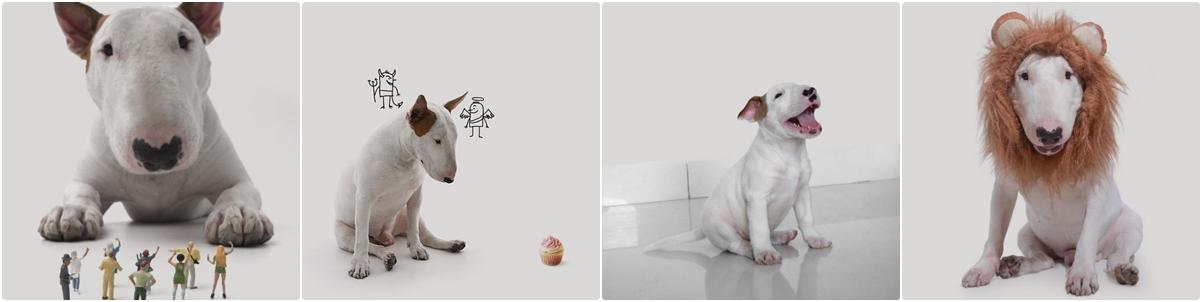 Instagrans de cachorros que são fofos e engraçados