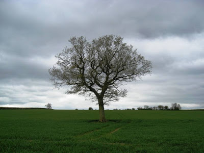 Lone tree, green field, grey skies