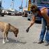 Βοηθώντας τα ζώα στην Βηρυττό...