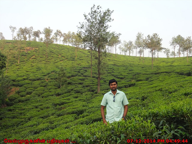 Wayanad Tea Estates