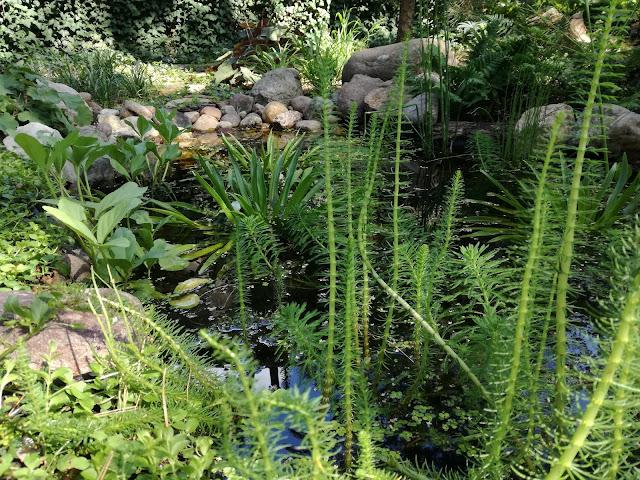 leśna sadzawka w ogrodzie, rośliny wodne
