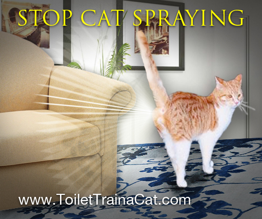 Eliminating Smell of Cat Spray