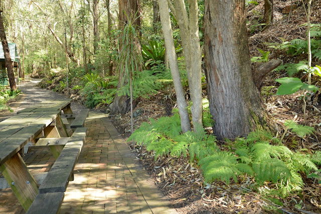 The Illawarra Grevillea Park is a place to enjoy a wander and a picnic, as well as browsing the plants and books for sale. Image shows a picnic area in the park.