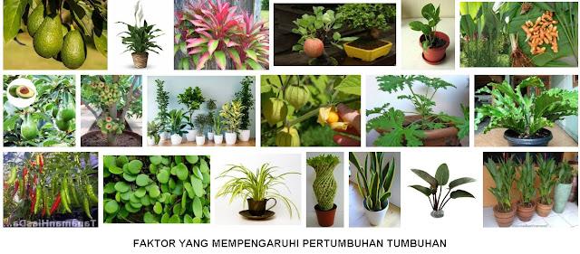 Pertumbuhan Tumbuhan : 6 Faktor Eksternal + 2 Faktor Internal
